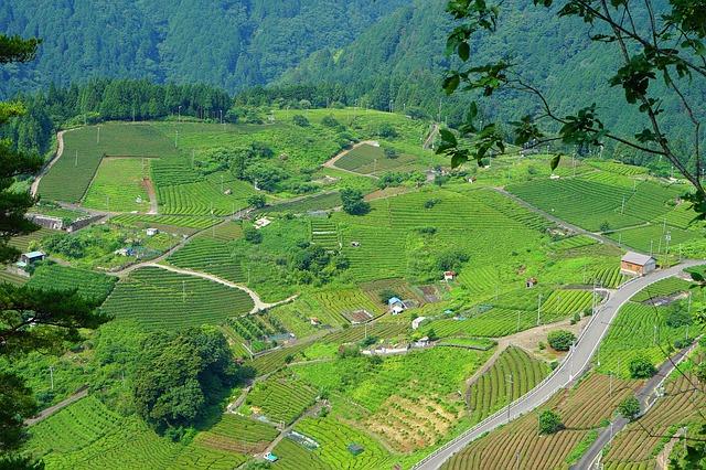 aerial view of tea fields japan